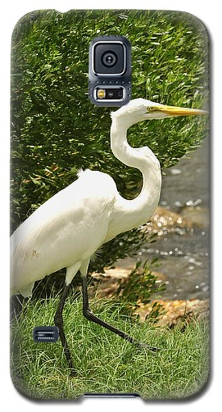 Galaxy S5 Case featuring the photograph Egret By The Bay by Rick Frost
