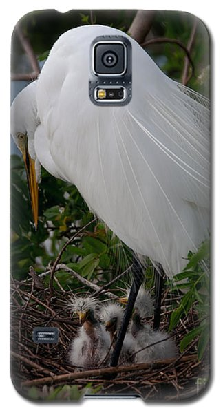 Egret With Chicks Galaxy S5 Case