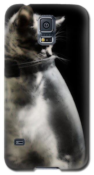 Galaxy S5 Case featuring the photograph El Kitty by Jessica Shelton