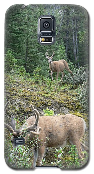 Elegant Elk Galaxy S5 Case