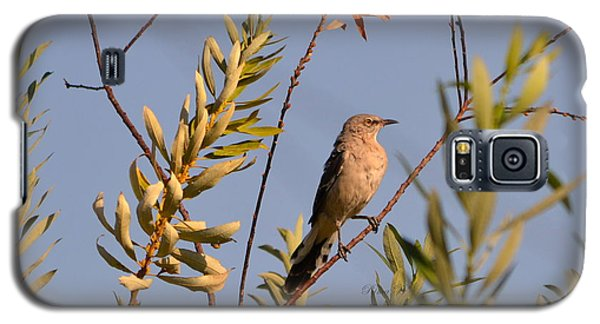 Galaxy S5 Case featuring the photograph Mocking Bird1 by Rima Biswas