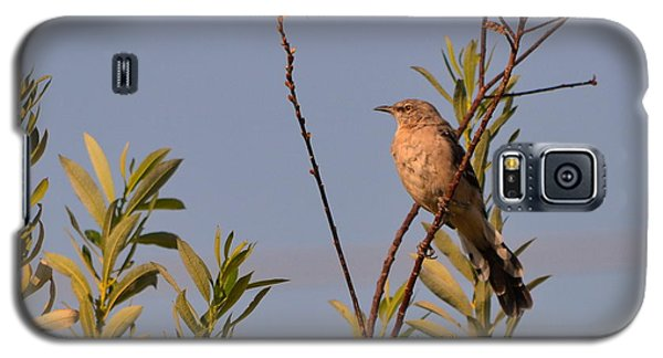 Galaxy S5 Case featuring the photograph Mocking Bird2 by Rima Biswas