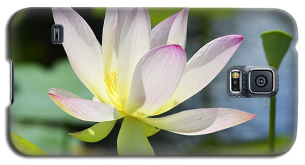 Enchanted Beauty Galaxy S5 Case