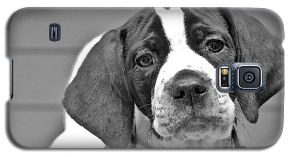 English Pointer Puppy Black And White Galaxy S5 Case