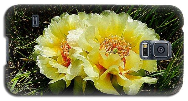 Plains Prickly Pear Cactus Galaxy S5 Case by Blair Wainman