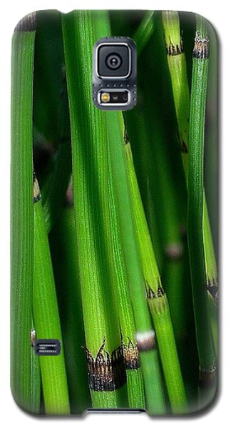 Galaxy S5 Case featuring the photograph Equisetum by Judi Bagwell