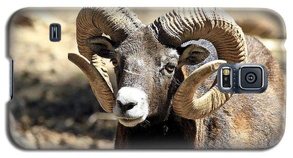 European Big Horn - Mouflon Ram Galaxy S5 Case