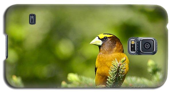 Evening Grosbeak Galaxy S5 Case