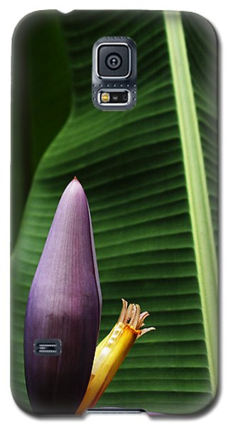 Exploring Light In Nature Galaxy S5 Case by Barbara Middleton