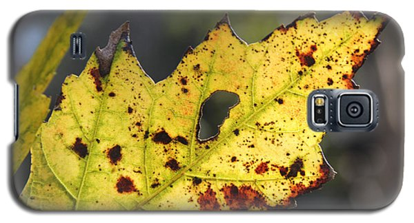 Face Of A Leaf Galaxy S5 Case