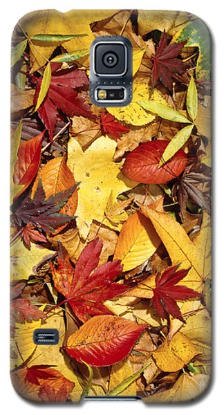 Fall  Autumn Leaves Galaxy S5 Case by Bruce Stanfield