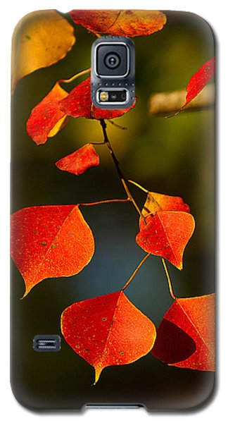 Galaxy S5 Case featuring the photograph Fall Color 2 by Dan Wells