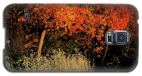 Galaxy S5 Case featuring the photograph Fall Colors 2 by Vilas Malankar