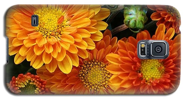 Galaxy S5 Case featuring the photograph Fall Colors by Bruce Bley