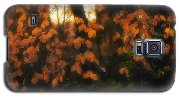 Fall Colours Galaxy S5 Case