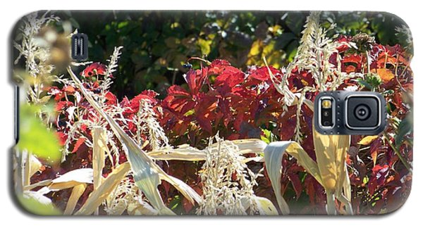 Fall Harvest Of Color Galaxy S5 Case
