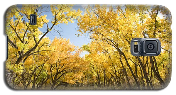 Fall Leaves In New Mexico Galaxy S5 Case