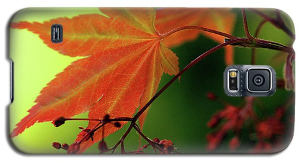 Fall Leaves Galaxy S5 Case