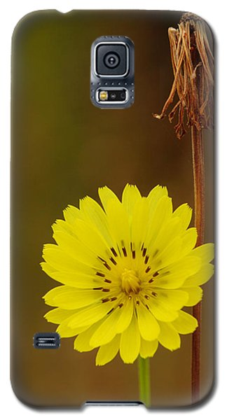 False Dandelion Flower With Wilted Fruit Galaxy S5 Case