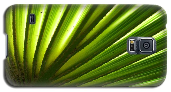 Galaxy S5 Case featuring the photograph Fan Frond by Ginny Schmidt