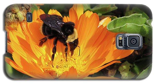 Feeding In Calendula Galaxy S5 Case