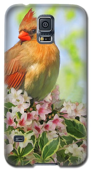 Galaxy S5 Case featuring the photograph Female Cardnial In Wegia Digital Art by Debbie Portwood