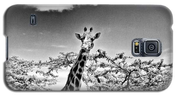 Female Giraffe  Galaxy S5 Case