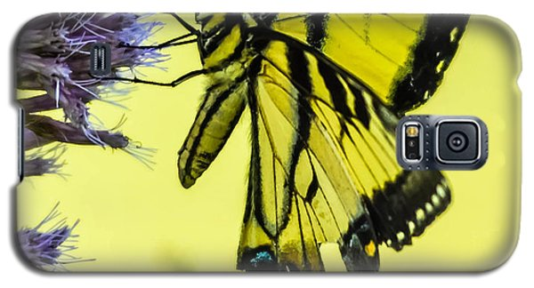 Galaxy S5 Case featuring the photograph Female Tiger Swallowtail Butterfly by Brian Stevens