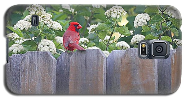 Galaxy S5 Case featuring the photograph Fence Top by Elizabeth Winter