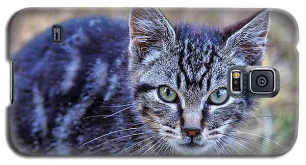 Galaxy S5 Case featuring the photograph Feral Kitten by Chriss Pagani