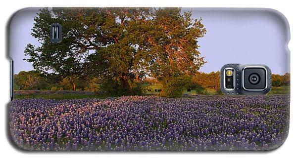 Field Of Blue Galaxy S5 Case