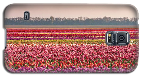 Field With Tulips Galaxy S5 Case by Hans Engbers