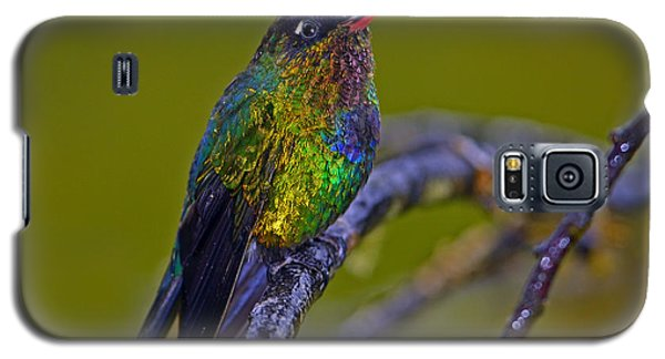 Fiery-throated Hummingbird Galaxy S5 Case