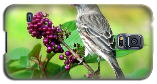 Finch Eating Beautyberry Galaxy S5 Case