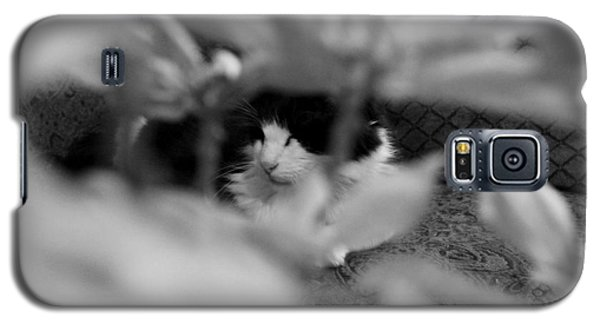 Galaxy S5 Case featuring the photograph Find The Kitty by Jeanette C Landstrom