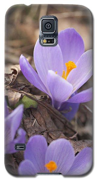 First Crocus Blooms Galaxy S5 Case