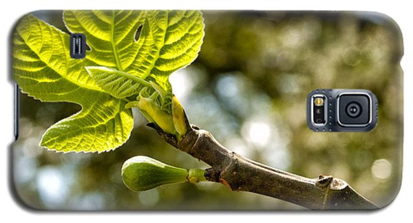 First Leaves And Fig  Galaxy S5 Case by Barbara Middleton