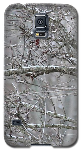 First Snow Fall Galaxy S5 Case by Kume Bryant
