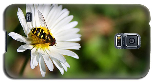 First Spring Bee Galaxy S5 Case