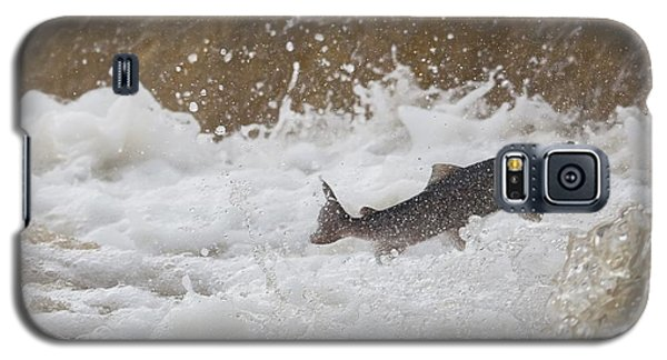 Fish Jumping Upstream In The Water Galaxy S5 Case