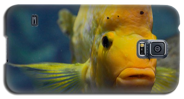 Galaxy S5 Case featuring the photograph Fish by Milena Boeva