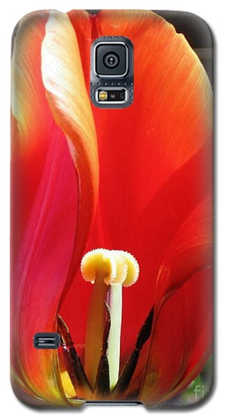 Flame Galaxy S5 Case by Rory Sagner