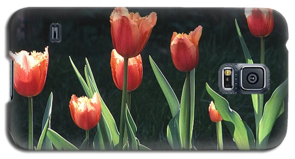 Galaxy S5 Case featuring the photograph Flared Red Yellow Tulips by Tom Wurl