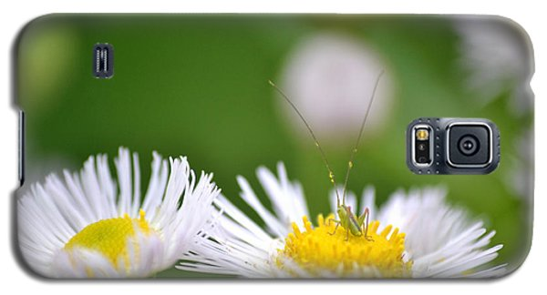 Galaxy S5 Case featuring the photograph Floral Launch-pad by JD Grimes