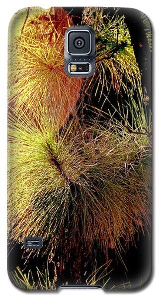 Florida Tree Galaxy S5 Case
