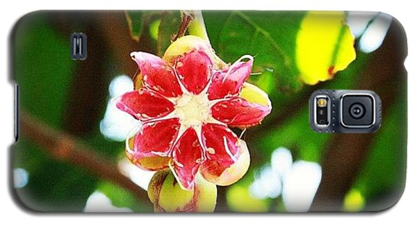 Political Galaxy S5 Case - Flower Or Fruit?? Another Wonder Of by Ahmed Oujan