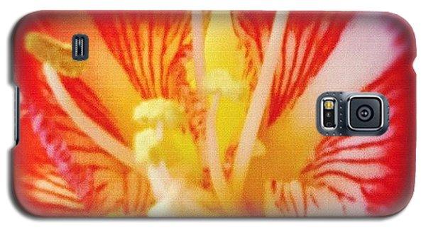 Decorative Galaxy S5 Case - Flower by Tom Crask