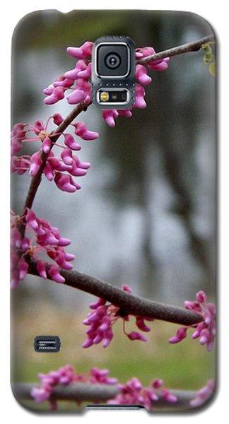 Flowering Tree 1 Galaxy S5 Case by Gerald Strine