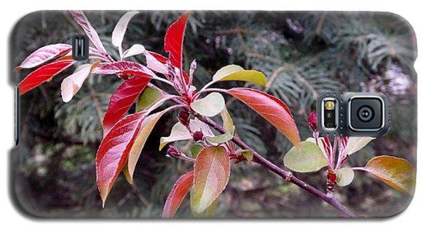 Flowering Tree 3 Galaxy S5 Case by Gerald Strine