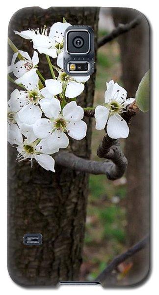 Floweringtree 2 Galaxy S5 Case by Gerald Strine